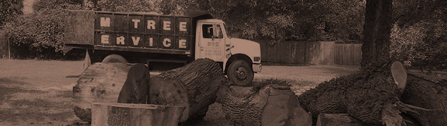Contact MM Tree Services